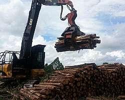 Cabeçote florestal distribuidor