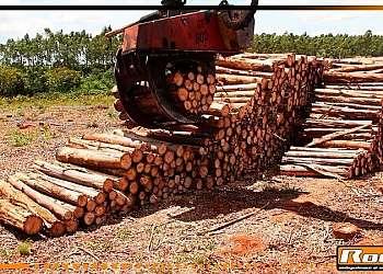 Garras de trator para floresta
