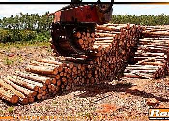 Garras para floresta